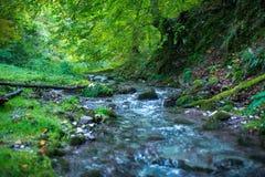 Halna rzeka przez lasów Zdjęcia Royalty Free
