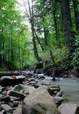 Halna rzeka w drewnie Zdjęcia Stock