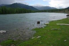 Halna rzeka w górach Prąd przez wąwozu rzeka Kamienie i skalista ziemia blisko rzeki Piękna góra Fotografia Stock