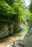 Halna rzeka w jarze z Skalistymi skłonami i zielonymi drzewami obraz royalty free