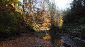 Halna rzeka w jesień lesie przy zadziwiającym słonecznym dniem zdjęcie wideo