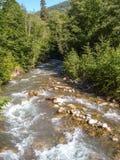 Halna rzeka w lesie Fotografia Royalty Free