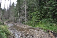 Halna rzeka w lesie Fotografia Stock