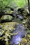 Halna rzeka wśród lasowych drzew Fotografia Stock
