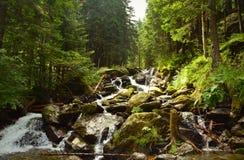 Halna rzeka w sosnowym lasu krajobrazie Obraz Stock