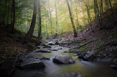 Halna rzeka z falezami w lesie w jesieni Fotografia Stock