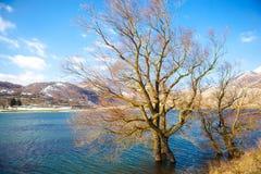 Halna sceneria z drzewem Obrazy Royalty Free