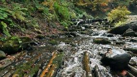 Halna strumień rzeka z gwałtownymi zbiory wideo