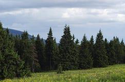 Halna trawa i jedlinowy drzewo na niebieskiego nieba tle 2 zdjęcie stock
