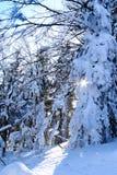 Halna zima Zdjęcia Royalty Free