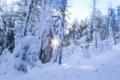 Halna zima Zdjęcie Stock