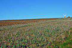 Halnakerwindmolen, West-Sussex, Engeland Stock Afbeeldingen