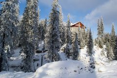 Halne jodły zakrywać z śniegiem obrazy royalty free
