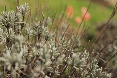 Halne rośliny Zdjęcie Royalty Free