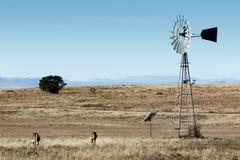 Halne zebry przy wiatraczkiem zdjęcie royalty free