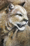 Halnego lwa pantera obraz royalty free