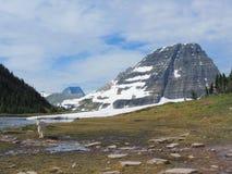 Halnej kózki oreamnos americanus przy słońce drogą Wzdłuż Wycieczkować ślad, przy Logan przepustki lodowa parka narodowego Montan zdjęcia stock