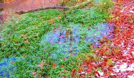 Halnej zatoczki Nadwodne rośliny zdjęcie royalty free