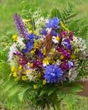 Halni łąka kwiaty wiążący w wiązce Zdjęcia Royalty Free