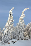 Halni śnieżni drzewa Obraz Stock