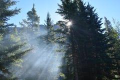 Halni drzewa z słońce promieniami obrazy royalty free