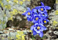 Halni kwiaty Zdjęcia Stock