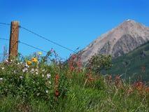 halni skaliści wildflowers Fotografia Stock