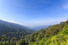 Halni tropikalni lasy deszczowi fotografia royalty free