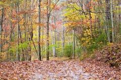 Halny ślad jest zalany z kolorem spadków liście obrazy stock