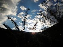Halny drzewa niebo Zdjęcia Stock