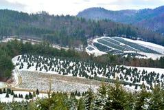 Halny drzewa Uprawiać ziemię Zdjęcie Stock