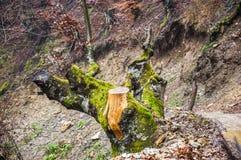 Halny drzewo obrazy stock