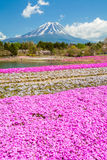 Halny Fuji i różowy mech pole w wiośnie Zdjęcie Royalty Free