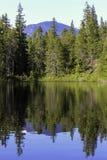 Halny i forrest odbicie w jasnym jeziorze zdjęcie stock