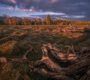 Halny jesień krajobraz z lasem i śniegiem nakrywał góry Zdjęcie Royalty Free