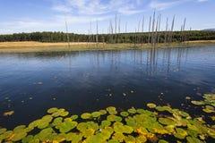 Halny Jeziorny drzewa lata krajobraz Zdjęcie Stock
