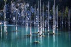 Halny Jeziorny Kaindy w Kazachstan Obraz Royalty Free