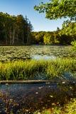 Halny jezioro park obrazy royalty free
