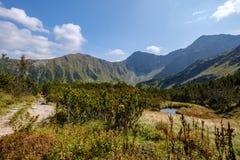 halny jezioro w późnym lecie w Slovakian Karpacki Tatrzańskim obraz royalty free