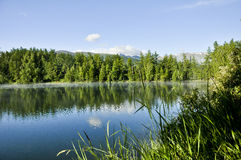 Halny jezioro wśród drzew Obrazy Stock