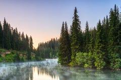 Halny jezioro w zielonym sosnowym lesie Obraz Royalty Free