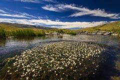 Halny jezioro z białymi wodnymi lelujami Zdjęcie Royalty Free
