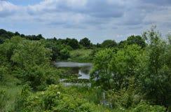 Halny jezioro z wodnymi lelujami Fotografia Stock