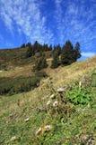 Halny krajobraz w Austria Obraz Stock