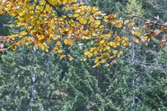 Halny krajobraz w pogodnym jesiennym dniu Zdjęcie Stock