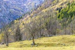 Halny krajobraz w pogodnym jesiennym dniu Fotografia Stock