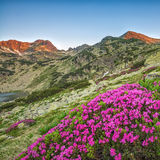 Halny kwiat Zdjęcie Stock