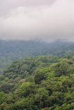 Halny las, Bali wyspa, Indonezja Obraz Stock