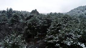 Halny las iglaści drzewa strzał Śnieżyści świerczyna wierzchołki Pogodna pogoda w halnym wąwozie w zimie zbiory