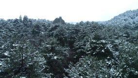 Halny las iglaści drzewa strzał Śnieżyści świerczyna wierzchołki Pogodna pogoda w halnym wąwozie w zimie zdjęcie wideo